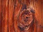 Nudo en el tronco de un árbol