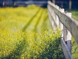 Flores silvestres junto a la valla