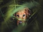 Perro escondido entre la hierba