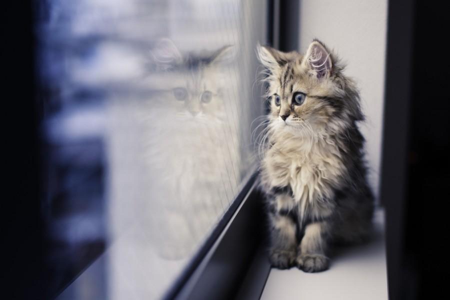 Gatito junto a una ventana