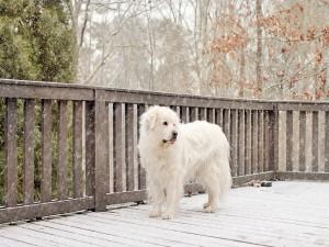 Perro blanco bajo la nevada