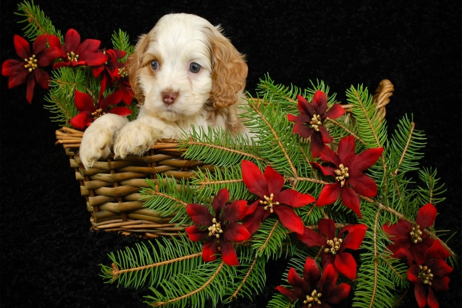 Tierno cachorro en una cesta con ramas de pino y flores