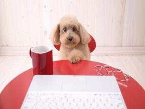 Perrito sentado frente a un ordenador portátil