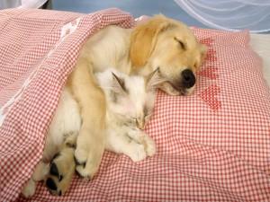 Perro y gato durmiendo abrazados