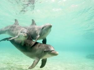 Tres delfines en el agua