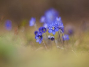 Bonitas flores silvestres
