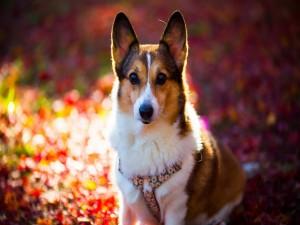 Perro sentado sobre las hojas