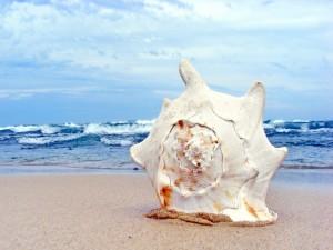 Hermosa caracola sobre la arena de una playa