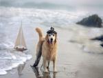 Perro en una playa