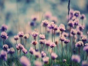 Lindas flores violetas entre la hierba
