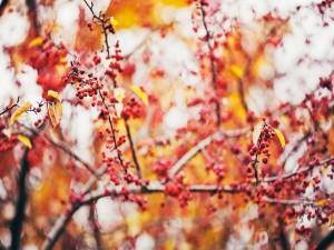 Bayas y hojas en las ramas de un árbol