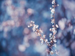 Rama con florecillas blancas