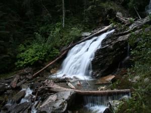 Restos de árboles en la cascada