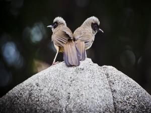 Dos pájaros sobre una roca