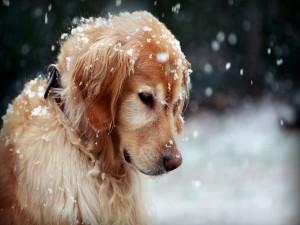 Un bonito perro bajo la nieve