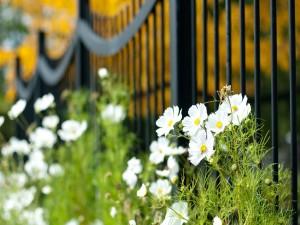 Bonitas flores blancas junto a una valla negra