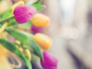 Bonitos tulipanes de colores
