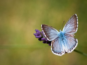 Una bonita mariposa posándose sobre una flor