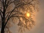 Los rayos del sol entre las ramas nevadas de un árbol