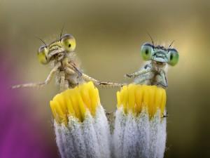 Insectos posados sobre las flores