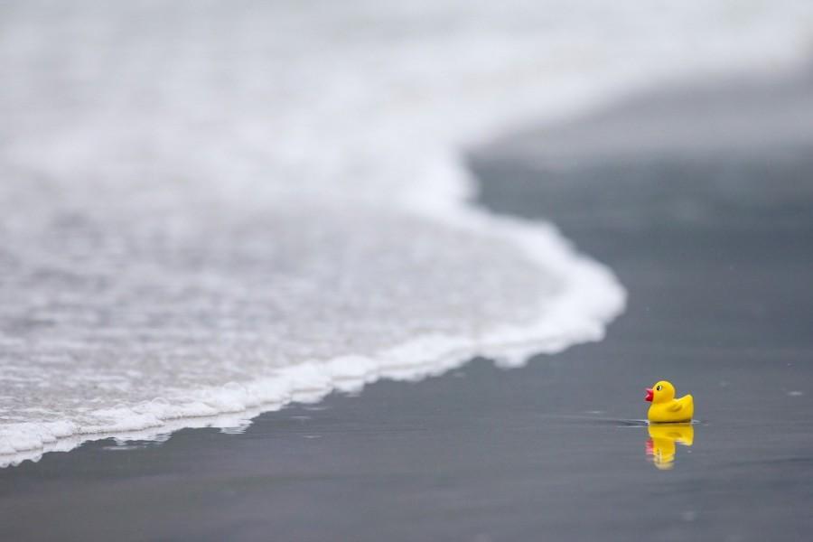 Pato de goma a orillas del mar