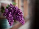 Hermosas lilas