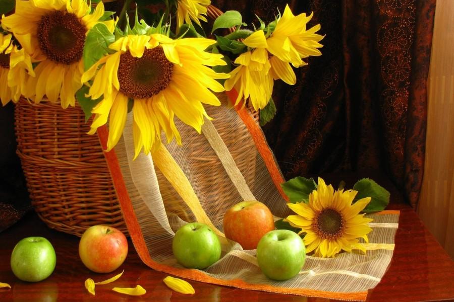 Girasoles en una cesta y manzanas a su alrededor
