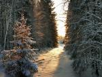 Camino nevado iluminado por los rayos del sol
