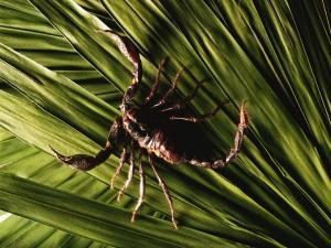 Escorpión sobre hojas verdes