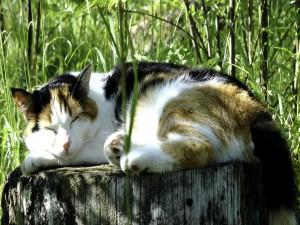 Gato dormido sobre un tronco