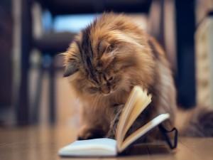 Gato mirando un libro
