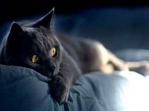 Gato tumbado en una cama