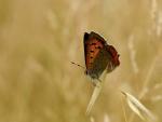 Mariposa posada en el campo