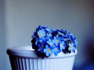 Bonitas florecillas azules
