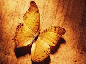 Bonita mariposa