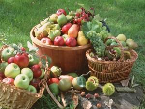 Exquisitas frutas frescas en cestas