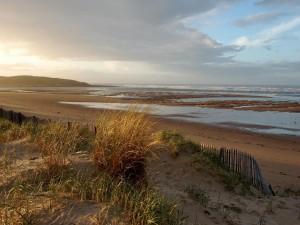 Plantas en la arena de la playa