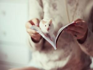 Rata blanca sobre un libro