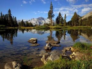 Pequeño lago entre pinos y montañas