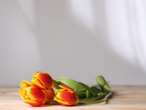 Tulipanes sobre una mesa