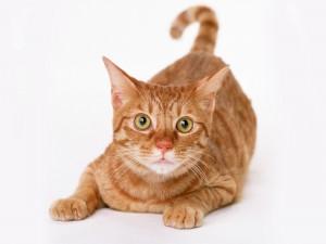 Un gato muy atento