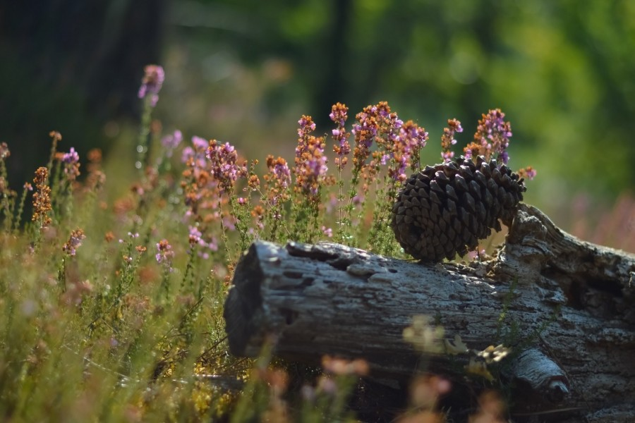 Piña sobre un tronco rodeado de flores