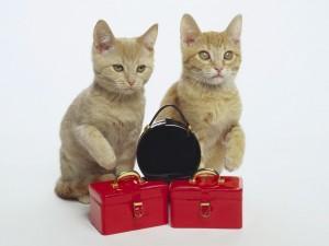 Gatos junto a unas maletitas