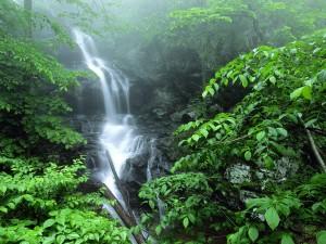 Cascada fluyendo sobre la roca