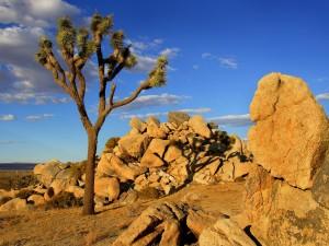 Árbol de Josué en el desierto de Mojave