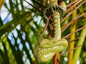 Serpiente pitón enroscada en un árbol