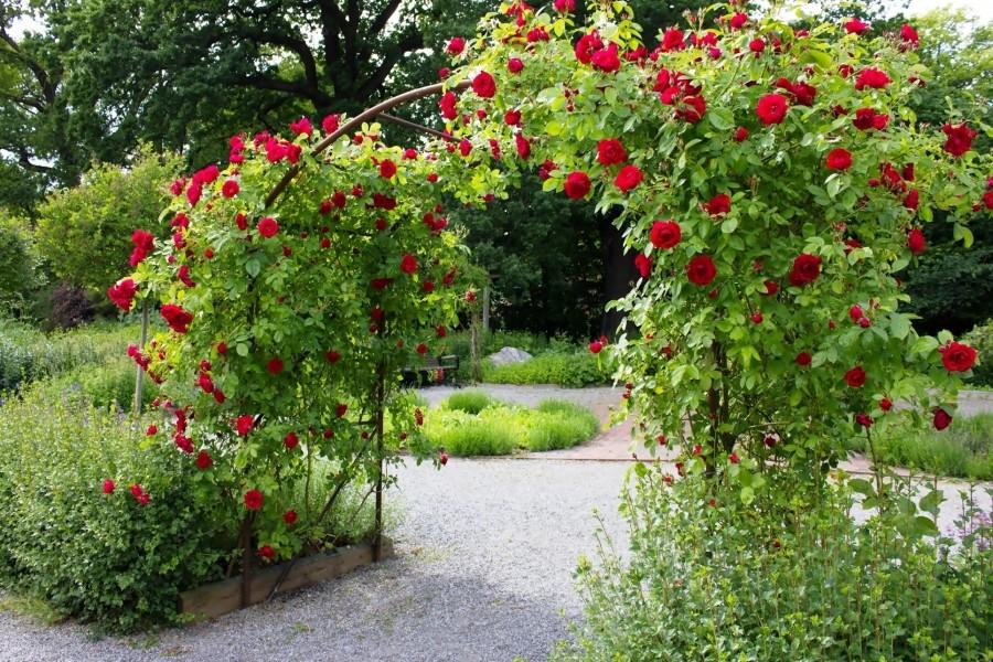 Resultado de imagen para arco de rosas