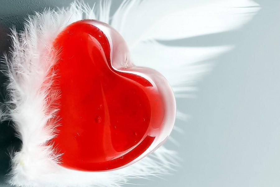 Corazón entre plumas
