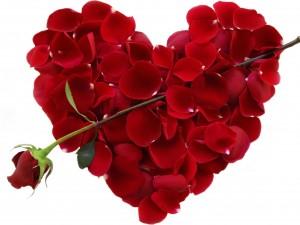 Pétalos de rosa formando un corazón con una rosa cruzada