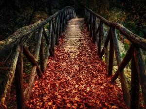 Puente de madera cubierto de hojas de otoño